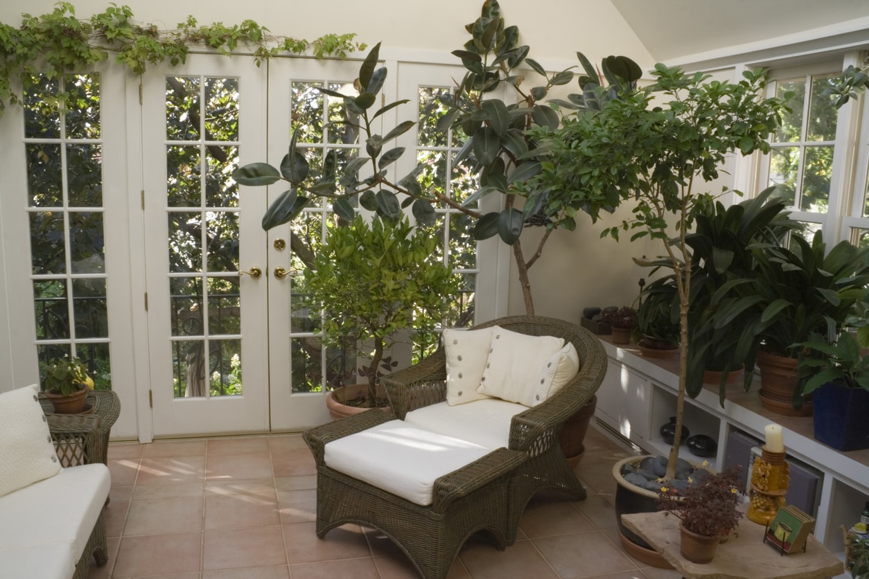 Plants in Sunroom